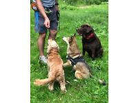 Mitchell Pet Help- Dog Walking & More. Professional and Reliable care for your pets in Swindon