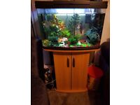 64 litre tropical fish tank, cabinet & fish