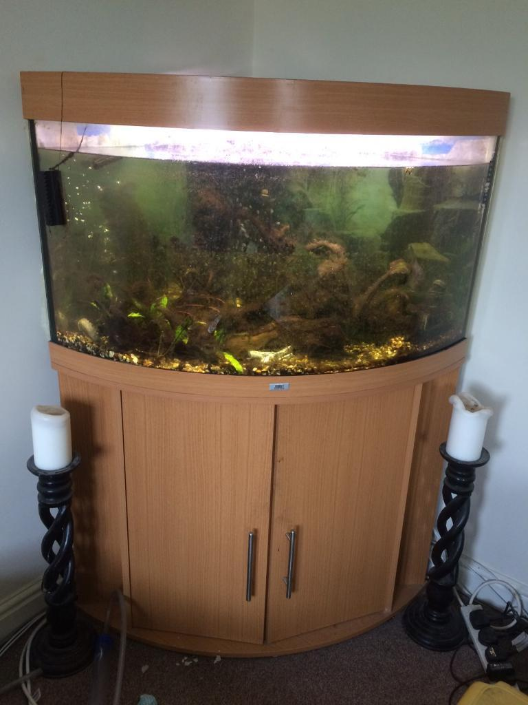 Aquarium fish tank northamptonshire - Juwel Corner Fish Tank Image 1 Of 6