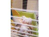 Baby gerbils