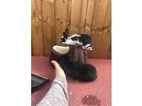 2 Mini Rex female baby rabbits (must go as a pair)