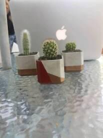 Handmade concrete plant pots