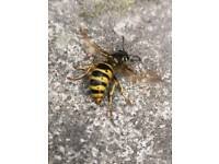 Wasp nest removal, hornet nest treatments, bee relocation wasps control