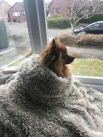 Doggy sitter wanted in newtongrange Dalkeith Edinburgh area