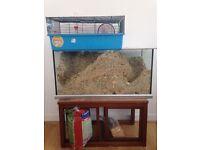 2 male gerbils plus their entire home