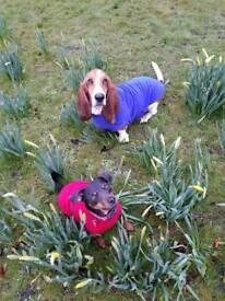 Outward hound Midlothian dog walking service