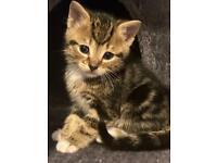 Two kittens remaining ❤️1 gorgeous girl !!! I gorgeous boy!!!