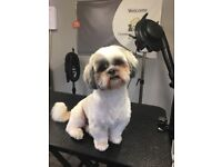 Charnwood Dog Grooming ( One to one grooming, ideal for nervous pets)