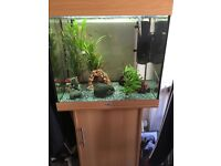 200l fish tank comes with everything you need and tropical fish