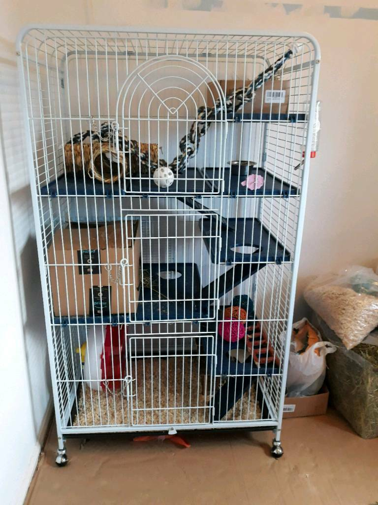 large rat cage and 2 two rats in morpeth. Black Bedroom Furniture Sets. Home Design Ideas