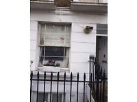 2 bedroom maisonette Victorian conversion sole use garden looking to swap