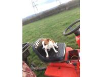 Wanted ride on mowers any garden mowers rotivators motorcycles quads spares or repairs anything