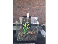 AquaPendant 25 litre fish tank - Perfect Condition!