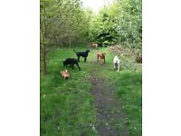 Experienced professional dog walker/driver wanted - West London