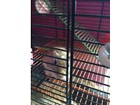Lovely friendly pair of gerbils and accessories for sale