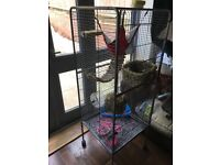 3 male rats and cage