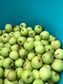 FREE Green Apples