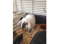 House rabbit with cage, bowls and water bottle