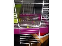Practically brand new hamster cage