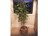 Artificial 6ft Ficus Tree