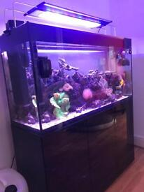 Marine full setup with live rock, fish and corals