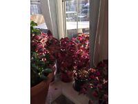 COLLIUS HOUSE PLANTS X 9