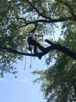 Tree removal ? Tree trimming ? Call Etree today