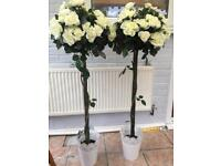 Bay tree with cream flowers, ideal for wedding