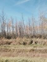 Treed land for sale