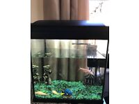 Fish tank with 5 fishes