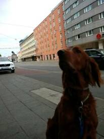 With dog, looking for a place to stay