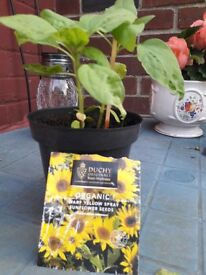 Organic plants .