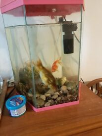Tank and fishes .pump and filter included