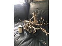 Redmoor root