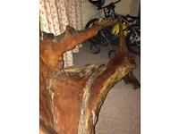 Tree bench. Chair
