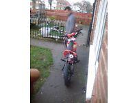 Pit bike 125 cc