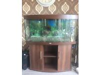Juwel vision 260 bow front aquarium fish tank walnut
