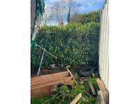 Laurels hedges free