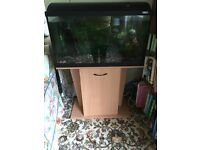 Fish tank, stand, accessories and 8 tropical fish