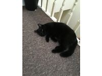 JD one year old black cat looking for a new home