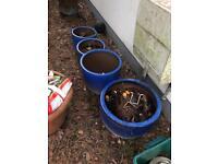 Large blue pots x 7