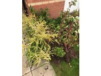 Shrubs plants bushes mix of