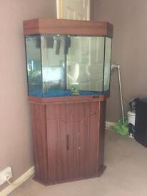 Jinlong Connor fish tank