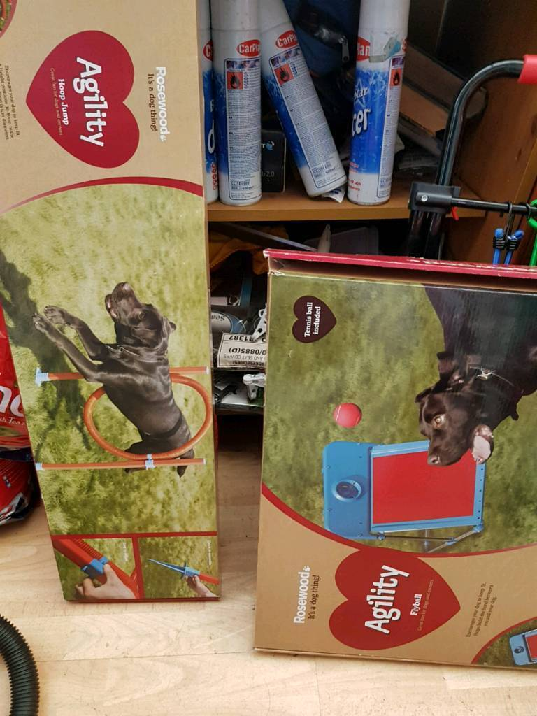 Dog fun agility items