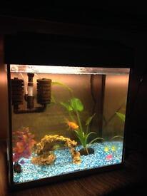 Fish tank plus 2 fish