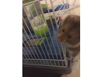 Rehoming a hamster