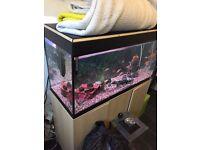 fluval fish tank 200 litre