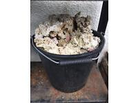 Bucket of marine or tropical rock