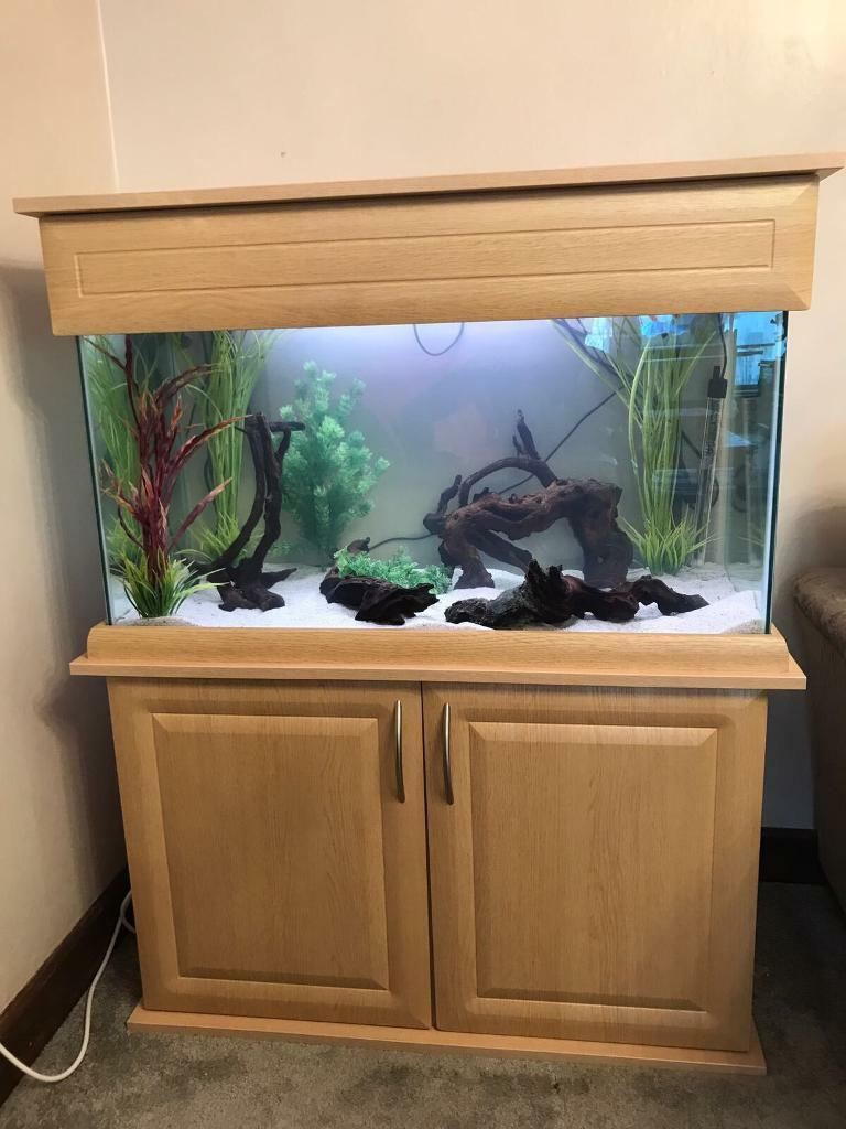 Large tropical fish tank set up
