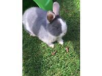 Beautiful baby girl rabbit
